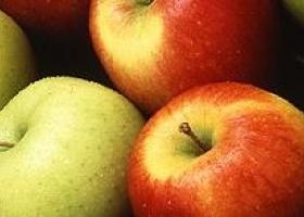 Melisa Frukt - fruits growth and trade