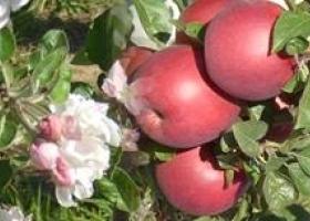 Яблена Натура - Склад за съхранение на плодове