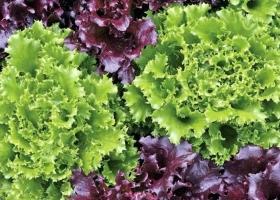 Melisa Frukt - salads